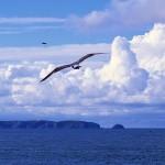 Vista sobre o Arquipélago das Berlengas em Peniche GoPeniche