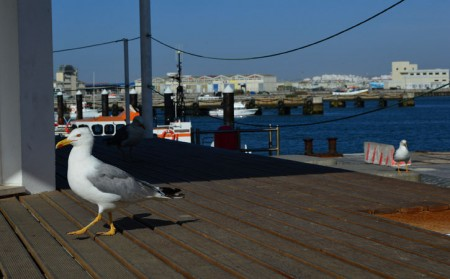 What to do in Peniche the Blog, GoPeniche Your Local Touristic Guide