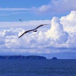 Berlengas archipelago Peniche main island Seagull GoPeniche Your Local Touristic Guide